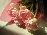 100303_tulipe