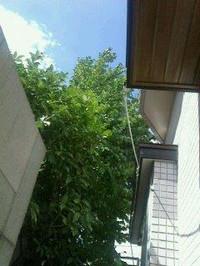 20120716_garden_cooler_n1