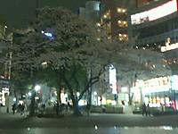 Nec_0022_20130324_geigei_sakura_200