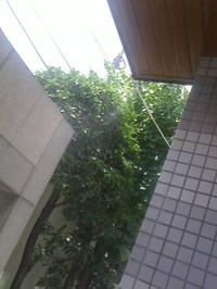 20130715_garden_cooler_n1
