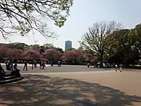 20140410_uenokouen_hazakura_n1