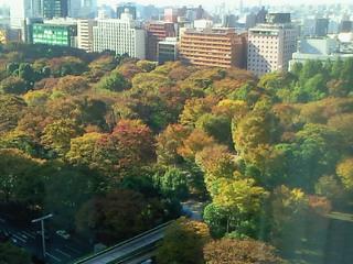 東京も紅葉の季節に。