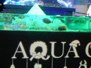 AQUA Christmas 2010 @お台場