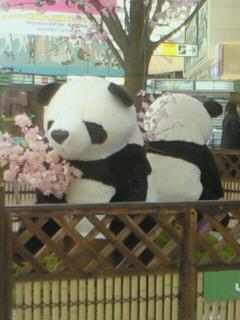 上野駅のパンダちゃん達