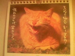 猫ちゃんの一言