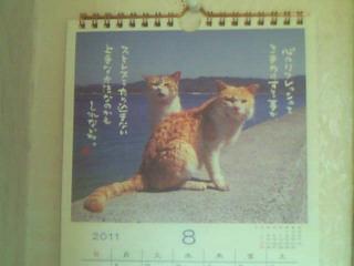 今月の猫ちゃんのお言葉