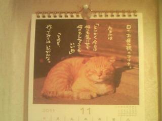 11月の猫ちゃんのお言葉